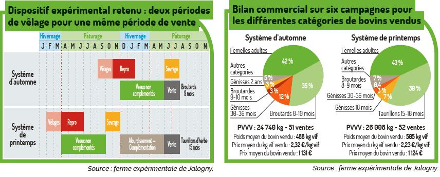 infographie taurillons d'herbe Jalogny
