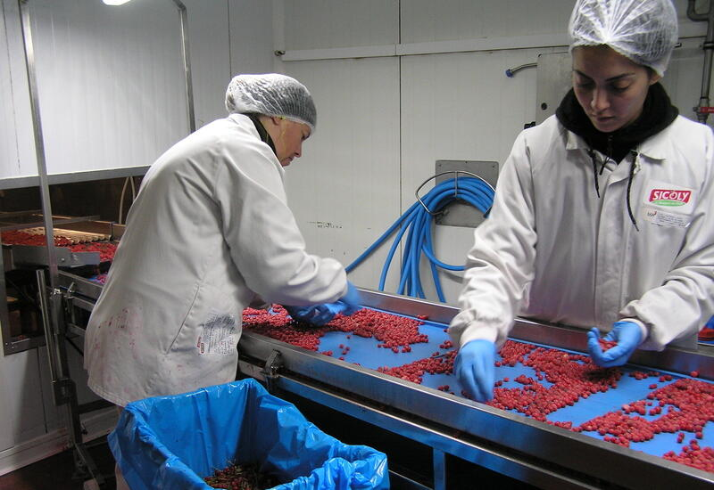 Le site de Sicoly à Saint-Laurent-d'Agny comprend deux lignes de transformation de fruits, quatre de conditionnement de purées et coulis, une de tri, calibrage et conditionnement de fruits surgelés et une de fabrication d'inserts de fruits gélifiés. © Pierre-Louis Berger - ...